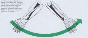 第十五章 手首のアクション 解剖学的構造とグリップについて